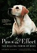 Paws & Effect The Healing Power Of Dog