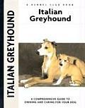 Italian Greyhound 195 Kennel Club