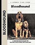 Bloodhound 053 Kennel Club
