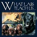 What Labs Teach Us...: Life's Lessons Learned from Labrador Retrievers