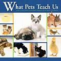 What Pets Teach Us: Life's Lessons Learned from Our Best Friends