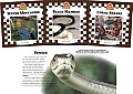 Snakes Set 2