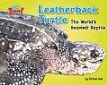Leatherback Turtle: The World's Heaviest Reptile