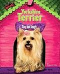 Yorkshire Terrier: Tiny But Tough
