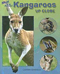 Kangaroos Up Close (Zoom in on Animals!) Cover