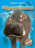 Hippopotamuses (Animal Safari)