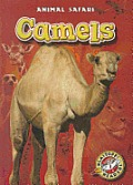 Camels (Animal Safari)