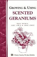 Growing and Using Scented Geraniums