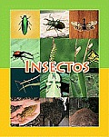 Insectos (Insects)