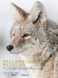 Yellowstone Wildlife: Ecology and...