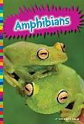 Amphibians (Animal Kingdom)