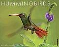 Hummingbirds Wall Calendar