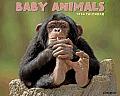 Baby Animals Wall Calendar