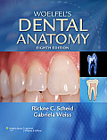 Woelfel's Dental Anatomy: Its Relevance to Dentistry (Recall Series: Osteopathic Medicine)