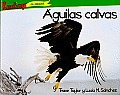 Aguilas Calvas = Bald Eagles (Depredadores Do Norteamerica)