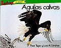 Aguilas Calvas = Bald Eagles (Depredadores Do Norteamerica)