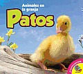 Av2 Spanish #47: Patos: Ducks