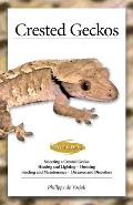 Crested Geckos: From the Experts at Advanced Vivarium Systems