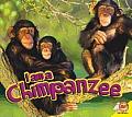 Chimpanzee (I Am)