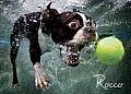 Underwater Dogs: Rocco Puzzle