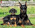 2015-Dobermans