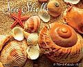 2015-Sea Shells