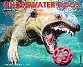 2015-Underwater Dogs
