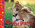 Playful Planet