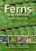Ferns of Southern Africa; a...