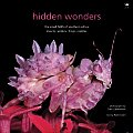 Hidden Wonders: The Small 5005 of Southern Africa: Insects, Spiders, Frogs, Reptiles