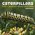 Caterpillars: Find, Identify, Raise Your Own