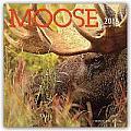 Moose 2016 Calendar