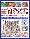Drawing and Painting Birds, Marine Creatures and Insects: How to Create Beautiful Artworks of Birds, Fish, Beetles and Butterflies, with Expert Tutori