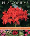 Pelargoniums: An Illustrated Guide to Varieties, Cultivation and Care, with Step-By-Step Instructions and Over 170 Beautiful Photogr