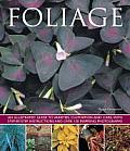 Foliage: An Illustrated Guide to Varieties, Cultivation and Care, with Step-By-Step Instructions and Over 150 Inspiring Photogr