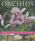 Orchids: An Illustrated Guide to Varieties, Cultivation and Care, with Step-By-Step Instructions and Over 150 Stunning Photogra