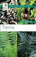 RHS Ferns
