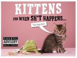 Kittens for When Sh*t Happens