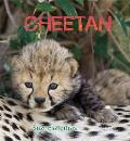 Eye on the Wild Cheetah