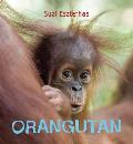 Eye on the Wild Orangutan