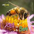 Life Cycles: Egg To Bee