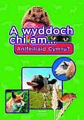 A Wyddoch Chi Am Anifeiliaid Cymru?