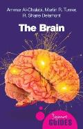 Brain A Beginners Guide