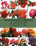 Rhododendrons & Azaleas: A Colour...