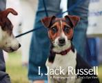 I Jack Russell A Photographer & a Dogs Eye View