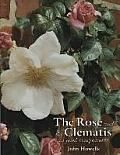 Rose & The Clematis As Good Companions