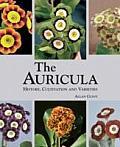 Auricula History Cultivation & Varieties