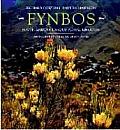 Fynbos South Africas Unique Floral Kingdom