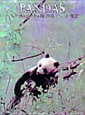Pandas (Portrait of the Animal World)