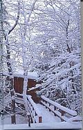 Winter Blank Journal